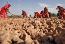 Village women labourers work at the construction site of a road at Merta district in Rajasthan February 22, 2013. REUTERS/Mansi Thapliyal/Files