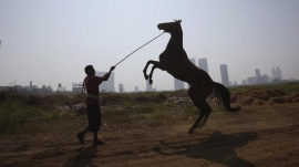 A groom holds his horse as it rears up after working out on the track, during early morning workouts for the upcoming Derby race in Mumbai February 2, 2012. REUTERS/Danish Siddiqui/Files
