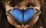 Stella Ferruzola, 3, poses with a Blue Morpho butterfly on her nose at the Sensational Butterflies Exhibition at the Natural History Museum in London March 25, 2013. REUTERS/Luke MacGregor