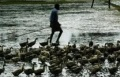 Kerala Bird Flu