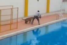 Leopard found inside school grounds in India