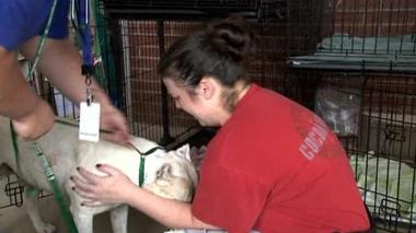 A happy reunion at makeshift pet rescue center in Oklahoma