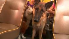 Pet bus allows Hong Kong's pooches to travel