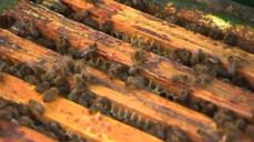 Bees provide a sweet solition to Airbus' pollution problem