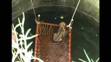 Leopard rescued from well in India