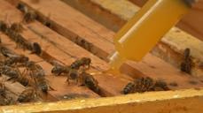 Bacteria-treated honey cures wounds and offers antibiotic resistance hope