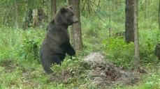 Just the bare necessities for Estonia's bear watchers