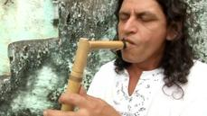 Brazilian artist grows bamboo to make instruments
