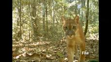Hidden cameras capture Peru's diverse wildlife