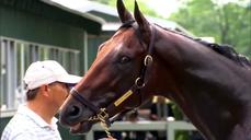 Triple Crown hopeful American Pharoah preps for race