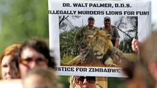 The killing of an African lion tops the week's crime wrap
