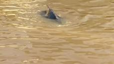 Whale guided to open water after swimming into Buenos Aires dock