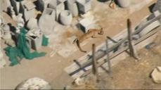 Mountain lion camps out in car repair shop