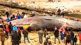Four sperm whales wash up on England's eastern shores