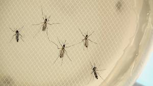 NIH's Fauci: No Zika infections contracted within U.S.
