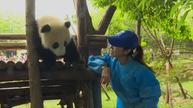 Actress Michelle Yeoh invites people to join panda naming campaign