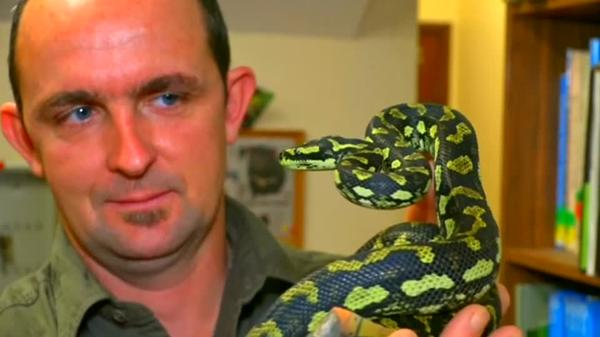 Snake on a train, and other grim animal stories