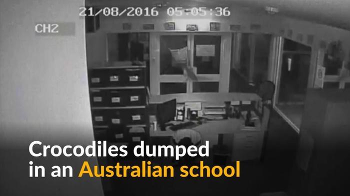Men dump crocodiles through school window during break-in