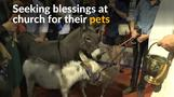 Blessings for animals during French mass