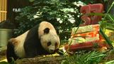 World's oldest panda dies in Hong Kong