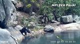 Chimps caught on camera 'fishing' for algae
