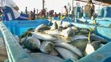 Problems below the surface for Thai fishing industry