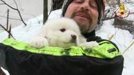 Puppies rescued at avalanche hotel