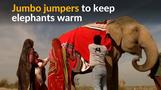 Elephants in north India get jumbo jumpers to stay warm