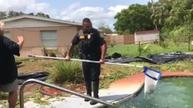 Alligator pulled from pool in Florida post-Irma