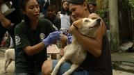 App tracks dog vaccinations in Philippine fight against rabies