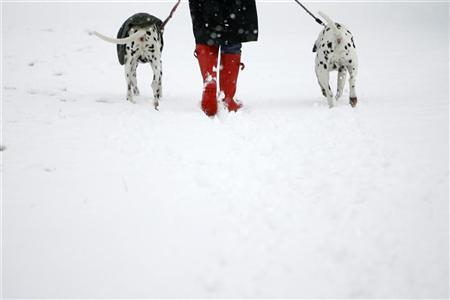 A woman walks her Dalmatians through a snow-covered Richmond Park in London February 8, 2007. There is now a Web site where you can find a partner compatible with your dog, cat, snake or spider. REUTERS/Kieran Doherty