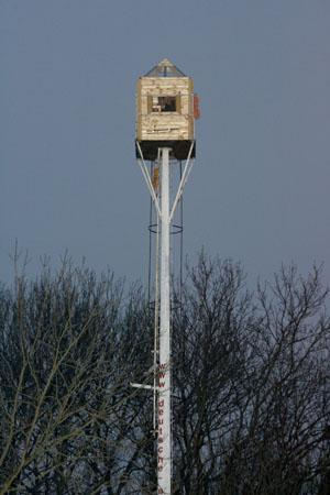 Fred Gregor, a 45-year-old lathe operator looks out of the window of his tiny cubicle atop the converted television mast in the village of Werben some 150 kilometres south of Berlin February 24, 2007. A German man who spent 10 days in a self-made box atop a 72-foot-tall pole to protest a looming jail term was lured off his perch by his wife -- who sent up a topless picture of herself in his lunch box. REUTERS/Arnd Wiegmann