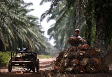 A worker unloads oil palms at a plantation outside Kuala Lumpur January 29, 2007. REUTERS/Bazuki Muhammad