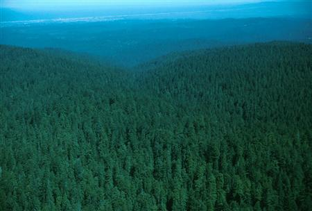 A forest is seen in California in an undated aerial photo from the Fish and Wildlife Service. Federal agency the U.S. Forest Service and non-profit group the National Forest Foundation launched a Web site on Wednesday where consumers can pay a $6 to offset a tonne of carbon dioxide, the main gas scientists link to global warming. REUTERS/Handout