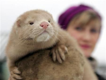 A worker holds a mink at a collective fur farm in the village of Babino, southeast of Minsk, November 26, 2005. Farmers and other locals were chasing thousands of minks let out of their cages at a fur farm in western Finland early on Friday by suspected animal rights activists. REUTERS/Vasily Fedosenko
