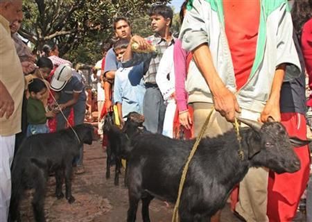 Nepali Hindus lead goats to the Bhadrakali templeto offer as sacrifice while observing the Dasain festival in Kathmandu, Nepal October 11, 2005. Officials at Nepal's state-run airline have sacrificed two goats to appease Akash Bhairab, the Hindu sky god, following technical problems with one of its Boeing 757 aircraft, the carrier said on Tuesday. REUTERS/Gopal Chitraka