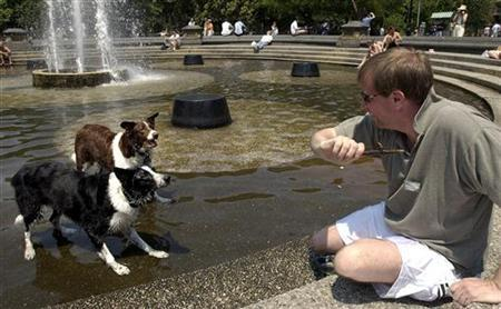 A man throws a stick to his dogs in the fountain at Washington Square Park in New York June 25, 2005. Federal health experts declared a small victory against a fatal and untreatable virus on Friday, saying canine rabies has disappeared from the United States. REUTERS/Chip East