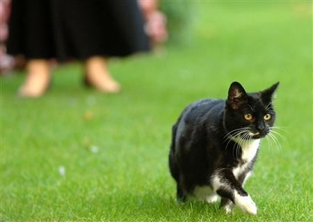 Sybil, the new cat at 10 Downing Street in London, walks in the garden of the British prime minister's house September 11, 2007. REUTERS/Clara Molden/WPA/PA/Pool