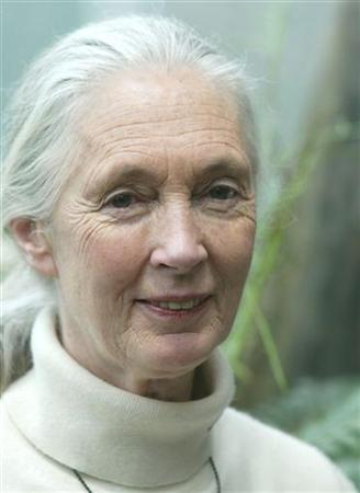 Jane Goodall poses for photographers in a file photo. The primate scientist said on Wednesday the race to grow crops for vehicle fuels is damaging rain forests in Asia, Africa and South America and adding to the emissions blamed for global warming. REUTERS/Leonhard Foeger