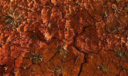 The earth cracks between weeds in a farmer's field near Griffith, 400km (249miles) north of Melbourne, August 22, 2007. Australia, the driest inhabited continent in the world, will get even hotter and drier due to climate change triggered mainly by greenhouse gases, authorities said on Tuesday in new projections. REUTERS/Tim Wimborne