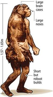 An undated illustration of a Neanderthal. Neanderthals, often portrayed as grunting, club-carrying brutes, may have been capable of sophisticated speech, researchers said on Thursday. REUTERS/Graphics