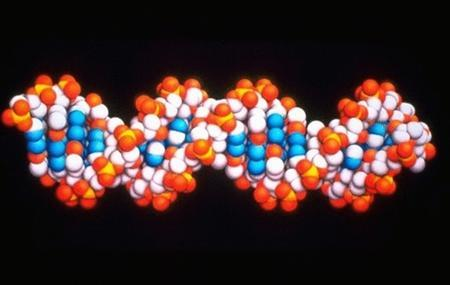 Undated file photo shows a DNA molecule. REUTERS/AstraZeneca/Handout