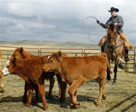 In this file photo Don Andrews gets set to rope a calf at the LJ Ranch near Jumping Pound, Alberta, May 8, 2005. Meat and poultry products being imported from Canada will be subjected to increased testing and inspection after an outbreak of E. coli in several U.S. states traced to beef from a Canadian company, the U.S. Agriculture Department said on Saturday. REUTERS/Patrick Price