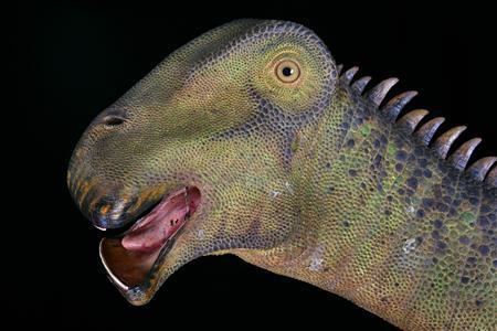 An artist's rendition of Nigersaurus taqueti, a 110 million-year old sauropod from the Sahara is shown in this undated handout image from National Geographic. A reconstruction of the dinosaur will be on display at the National Geographic Museum at Explorer's Hall in Washington until March 18, 2008. REUTERS/Mike Hettwer-National Geographic/Handout