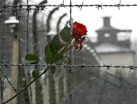 A rose is seen attached to barbed wire at the former Buchenwald Nazi death camp near Weimar in Thuringia April 9, 2005. Golda Bushkanietz is not religious but when Irena Walulewicz helped save her from death at the hands of the Nazis, she thought an angel saved her. REUTERS/Fabrizio Bensch