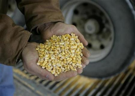 Raw corn is shown as it is unloaded for processing at the Lincolnway Energy plant in the town of Nevada, Iowa, December 6, 2007. U.S. food inflation is rising but don't blame the ethanol-based boom in corn prices, the head of global agriculture and food-industry research firm Informa Economics said on Monday. REUTERS/Jason Reed