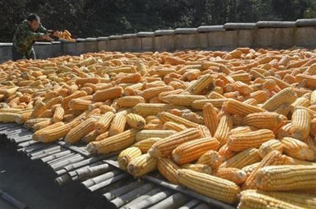 A farmer suns corn on the outskirts of Baokang, central China's Hubei province in this file photo from November 23, 2007. REUTERS/Stringer