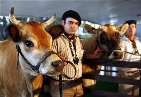 Farm workers Ricardo Visconti (L) and Ruben Perez hold Jersey transgenic cows, four-year-old Pampa Victoria and two-year-old Pampa Argentina respectively, in Buenos Aires April 17, 2007. The 600 cloned animals in the United States most likely have not produced offspring, an official with the Food and Drug Administration said on Thursday, as the agency downplayed the long-term impact cloning will have on the food supply. REUTERS/Enrique Marcarian