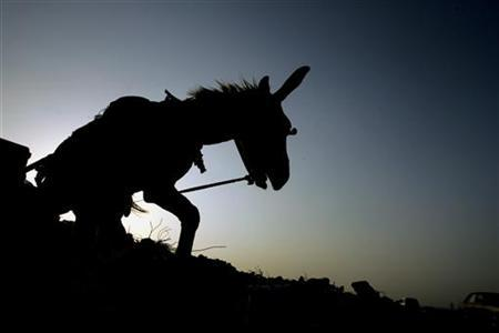 A donkey drags a cart with valuables in this file photo from the Gaza Strip September 17, 2005. Mordecai, a 7-year-old donkey, bested nine other hopefuls on Saturday in a contest to become the official live mascot for the 2008 Democratic National Convention in Denver. REUTERS/Yannis Behrakis