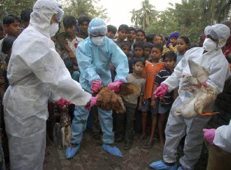 Health workers cull chickens in Birlapur village, about 20km south of Kolkata, January 29, 2008. REUTERS/Stringer